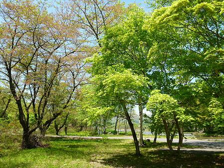 明治百年記念公園27(2012.5.19)