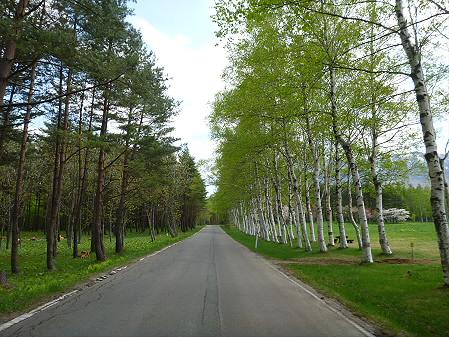 岩手県県民の森04(2012.5.19)