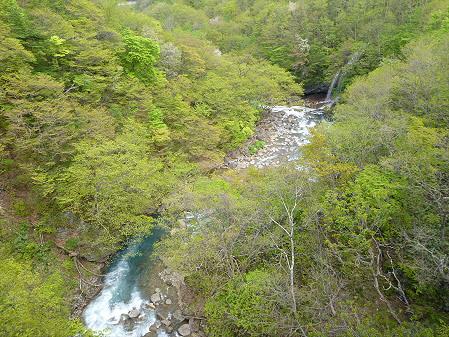 森の大橋05(2012.5.19)