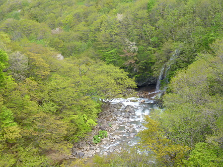 森の大橋07(2012.5.19)