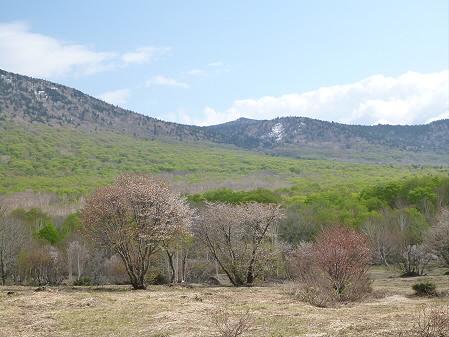 安比高原ブナ二次林10(2012.5.19)