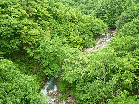 森の大橋03(2012.6.13)