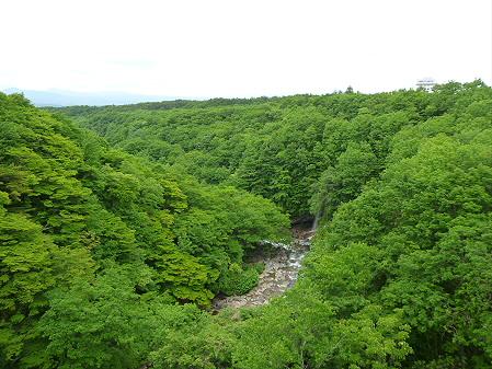 森の大橋05(2012.6.13)
