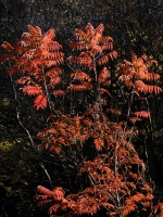BL141130紅葉・落ち葉の生駒1-5DSCF8698