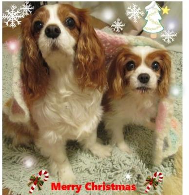 lolokoaブログ用 クリスマス 004