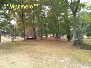 県央の森公園キャンプ場