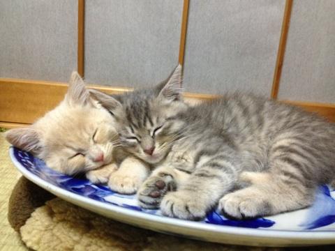 ネコ鍋ならぬネコ皿
