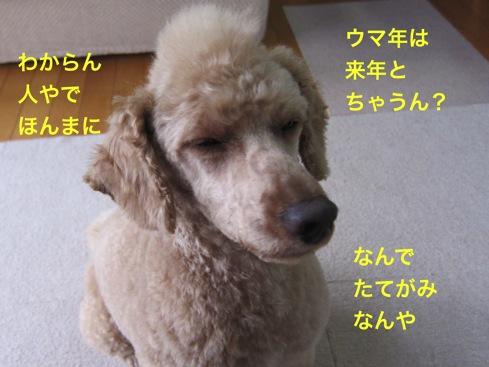 th_IMG_6648-1.jpg