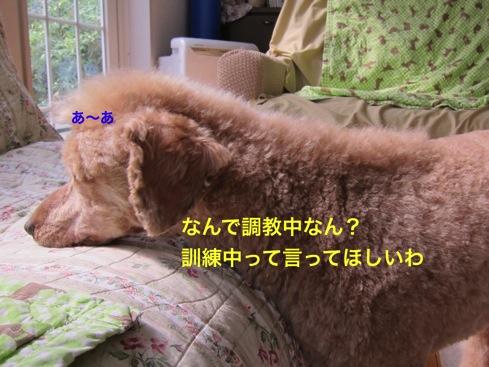th_IMG_6684-1.jpg