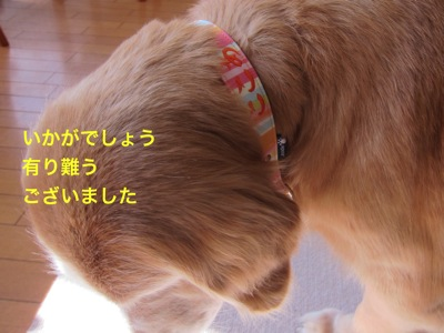 th_IMG_6785-1.jpg