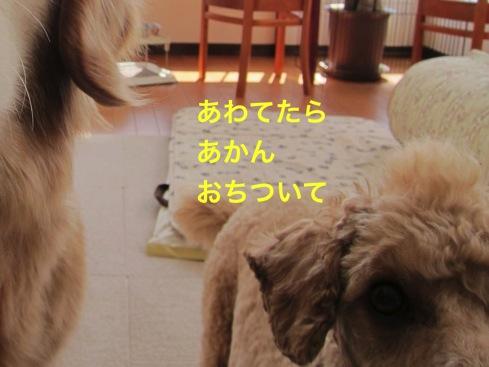 th_IMG_6806-2.jpg