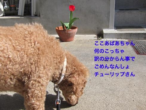 th_IMG_6859-1.jpg