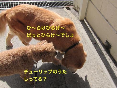 th_IMG_6861-1.jpg