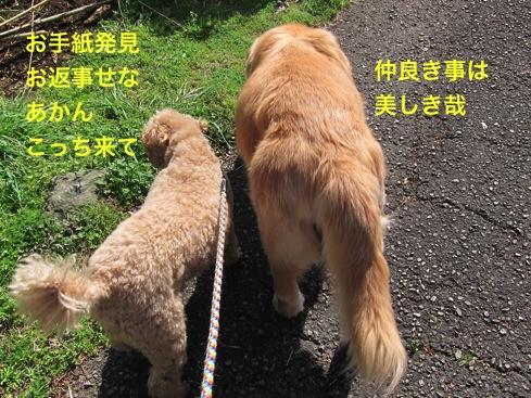th_IMG_6875-1.jpg