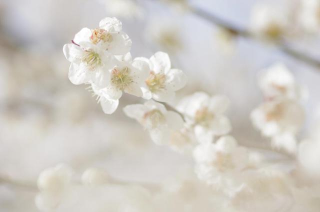 12淡~満開の花に抱かれて~