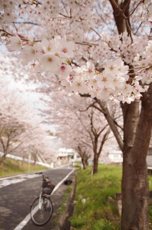 6 Bandit mark Ⅱ~桜並木の下で~
