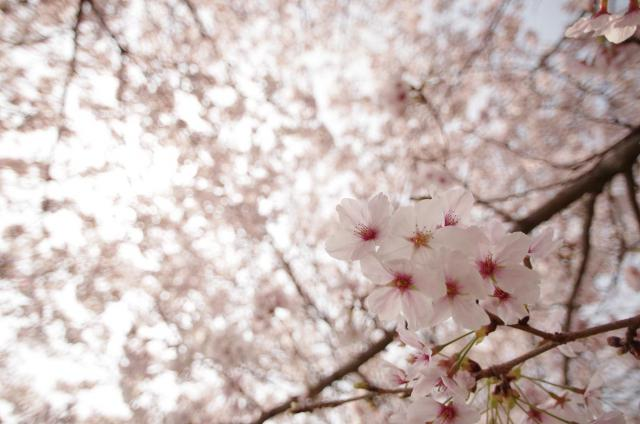 8 煌~春の煌きの中~