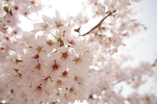 10 満~花びら大盛り~