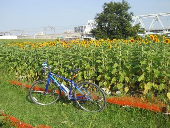 サイクリング8-15 (5)