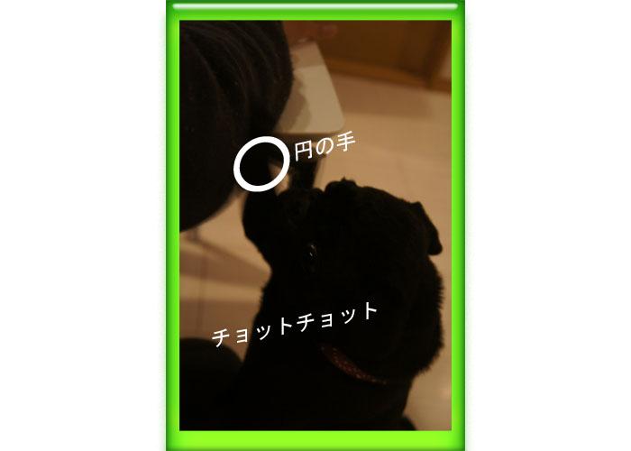 チョットチョット円