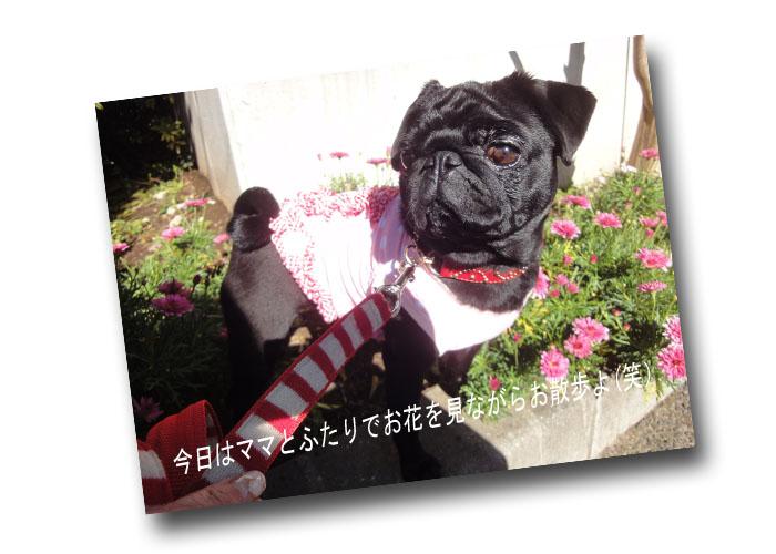 円ママとお散歩