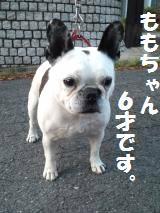 004_convert_20130502192212.jpg