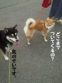 004_convert_20131009123802.jpg