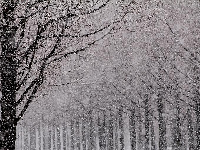 春先の牡丹雪