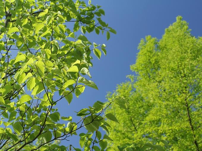 新緑の季節 金沢市太陽が丘