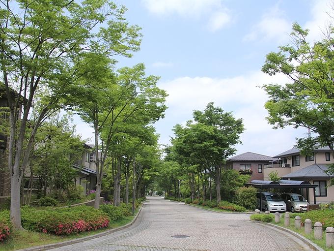 ケヤキの並木道 金沢市太陽が丘