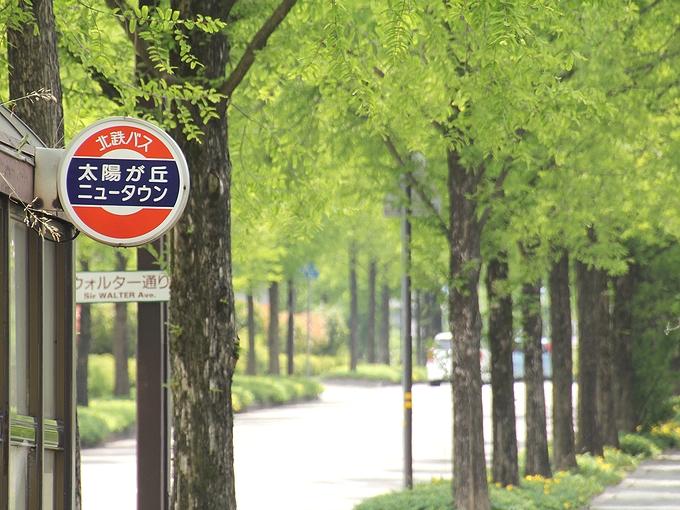 バス停とメタセコイア並木 金沢市太陽が丘