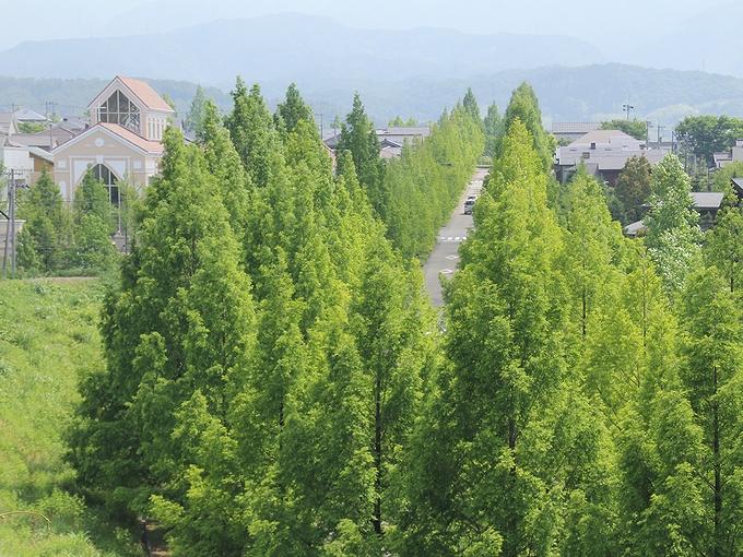 メタセコイア並木を見下ろす丘 金沢市太陽が丘