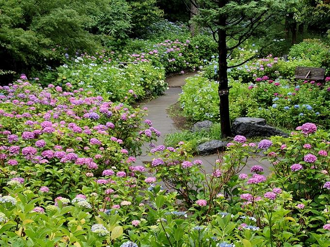 多摩川台公園 あじさい園を見下ろす