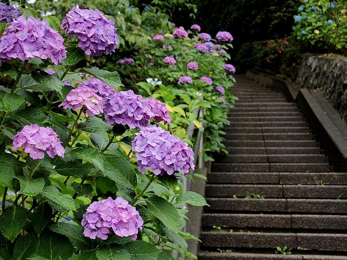 多摩川台公園 あじさい園へと続く階段