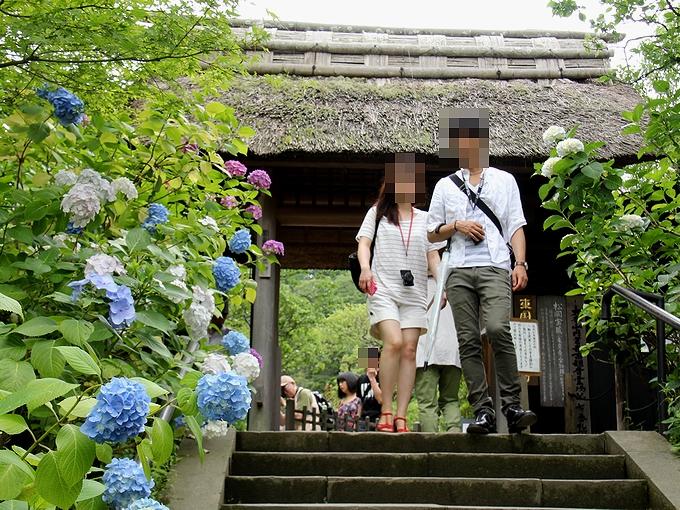 鎌倉 東慶寺の紫陽花