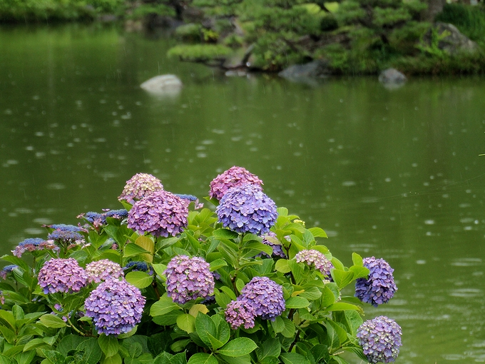 清澄庭園 梅雨の情景