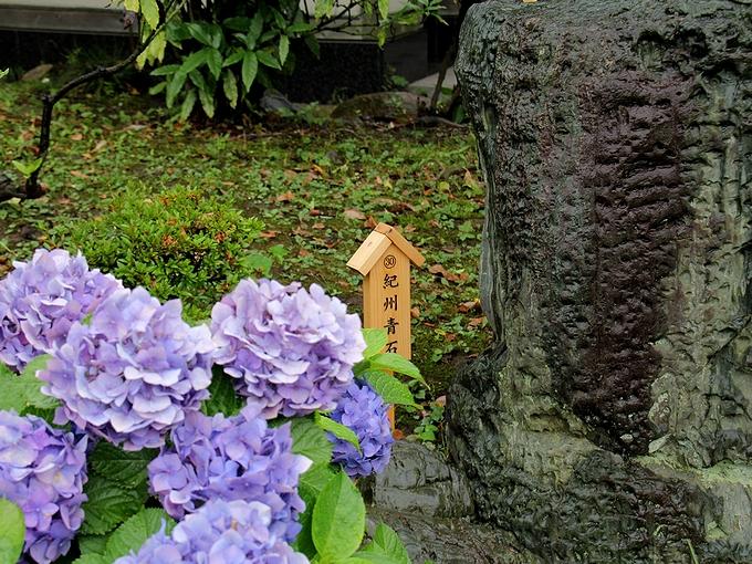 名石と紫陽花 清澄庭園