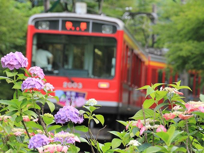 箱根登山電車と紫陽花