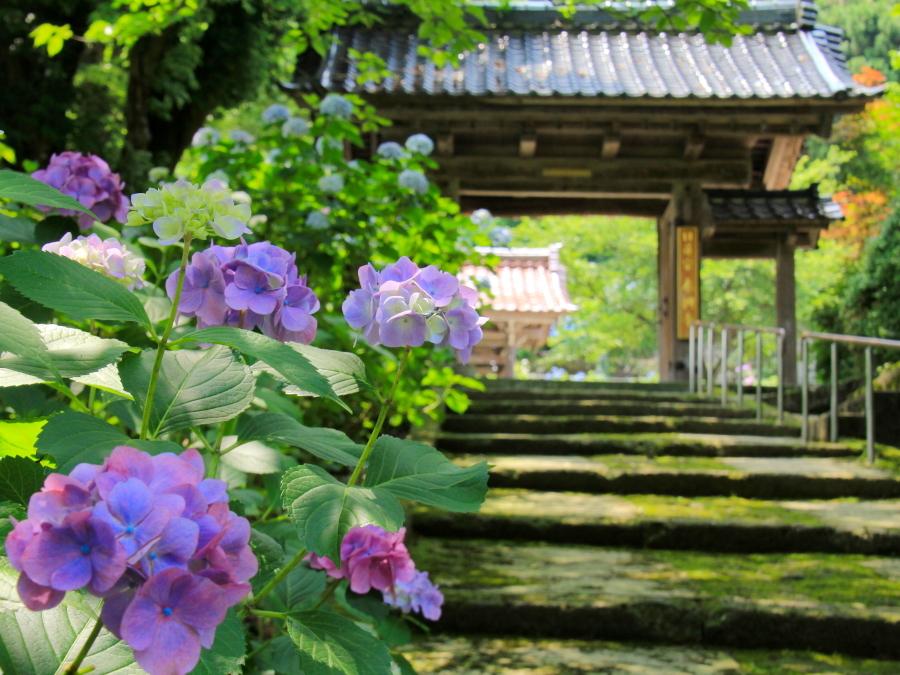 山門と紫陽花と 金沢市本興寺