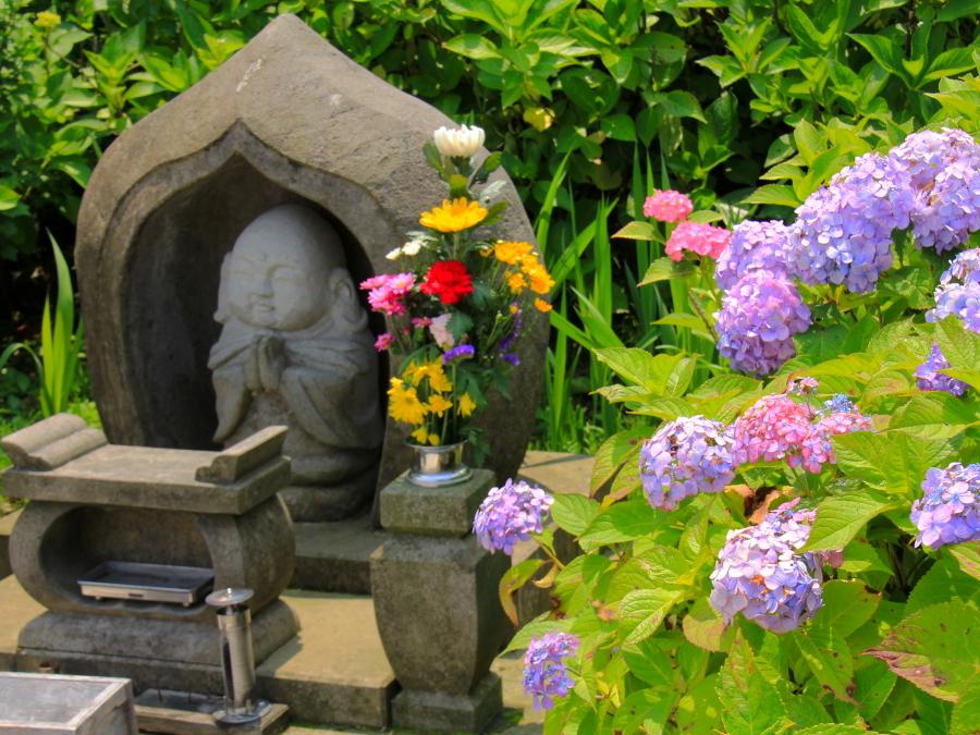 金沢本興寺 お地蔵さんと紫陽花と