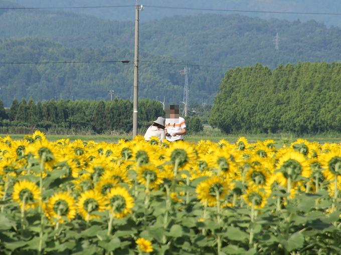 ひまわり村の展望台 津幡町河北潟干拓地