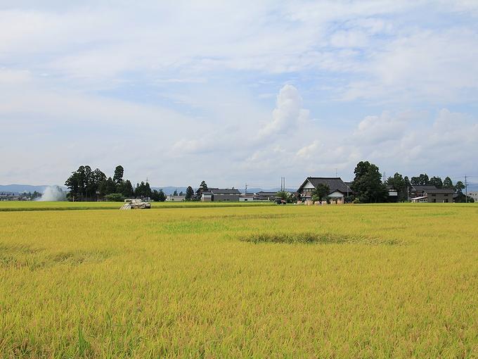 砺波平野散居村 稲刈り始まる
