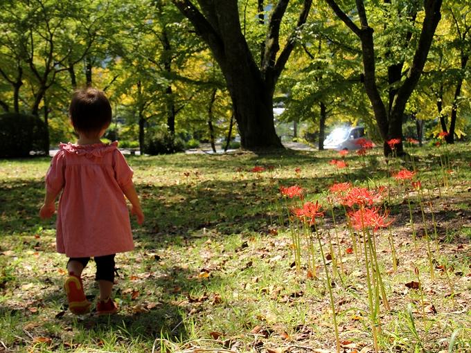 彼岸花咲く芝生をブラブラ