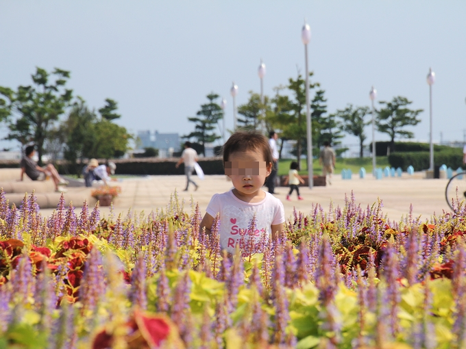 花の迷路で戯れる 海王丸パーク