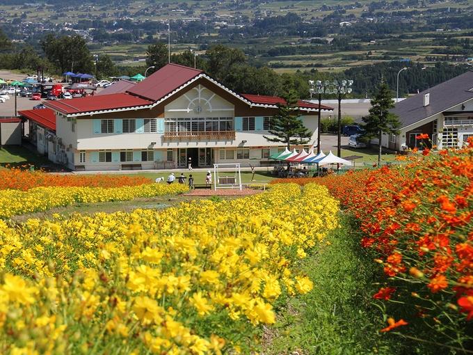 ゲレンデにオレンジのお花畑 イオックスアローザスキー場