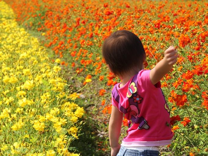 お花畑で戯れる イオックスアローザスキー場にて
