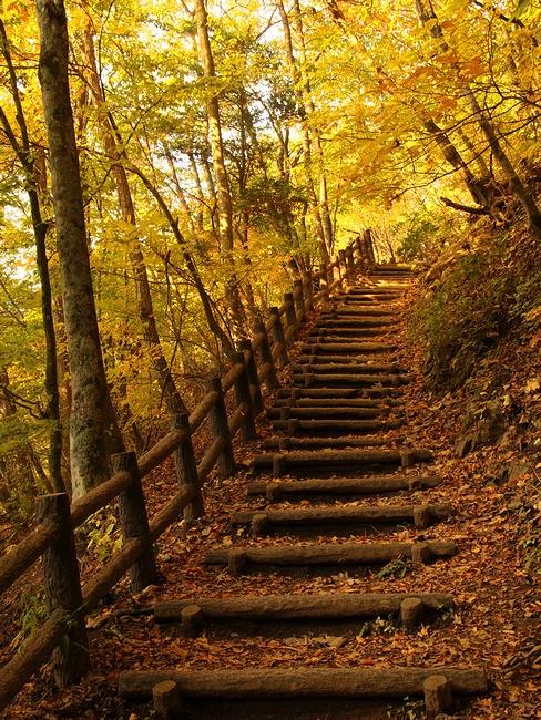 御坂峠付近の遊歩道の紅葉