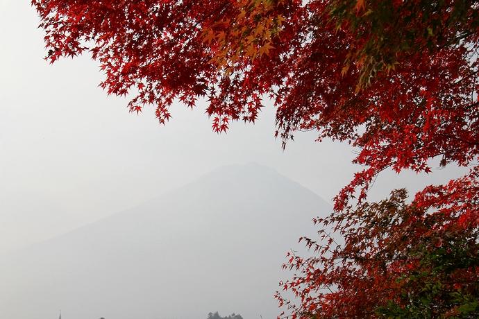 真っ赤なモミジと消え入りそうな富士山