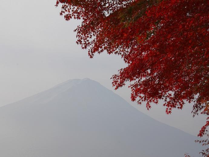 真っ赤なモミジとウッスラ富士山 「もみじトンネル」にて