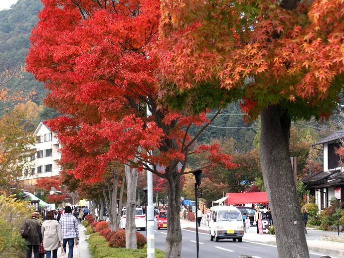 河口湖北岸地区の紅葉